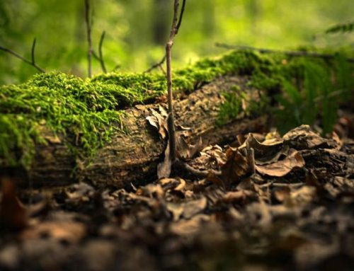 Live Musik: Sound of the Forest